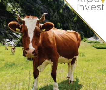 Escassez hídrica faz setor agropecuário diversificar investimentos